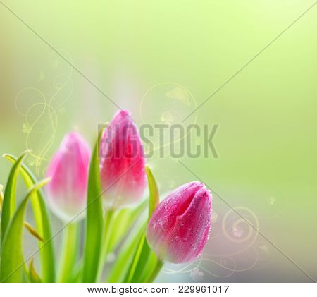 Pink Tulips Isolated On Green Background. Floral Background With Pink Tulips And Butterflies.