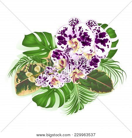 Bouquet With Tropical Flowers Orchid Spotted Phalenopsis  Floral Arrangement, With Beautiful  Palm,p