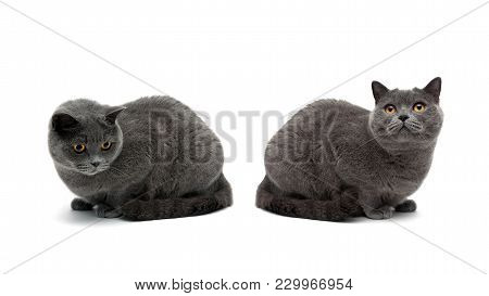 Two Cats With Yellow Eyes Isolated On White Background. Horizontal Photo.