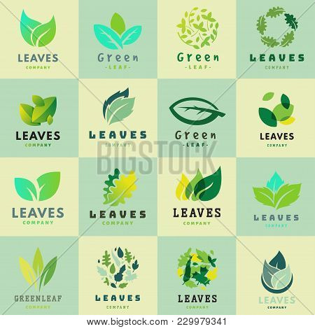 Green Leaf Eco Design Element Icon Friendly Nature Elegance Symbol And Decoration Floranatural Eleme