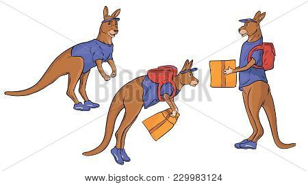 A Set Of Kangaroo Characters Delivers A Package.