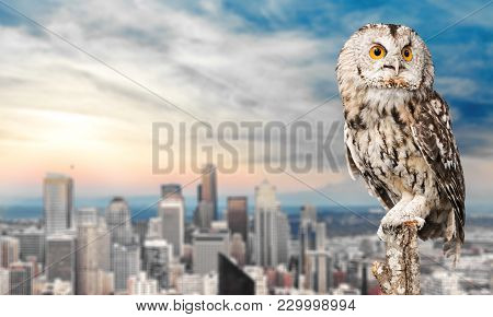 Beautiful Great Owl One Animal Studio Shot Animal Themes Wild Animal