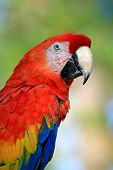 speaking parrot in a park in Florida poster