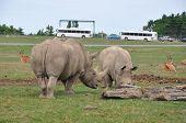 Big Rhinoceros Roaming Around In The Wild poster