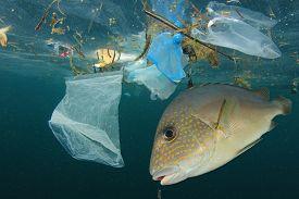 Fish and plastic pollution. Envrionmental problem - plastics contaminate seafood
