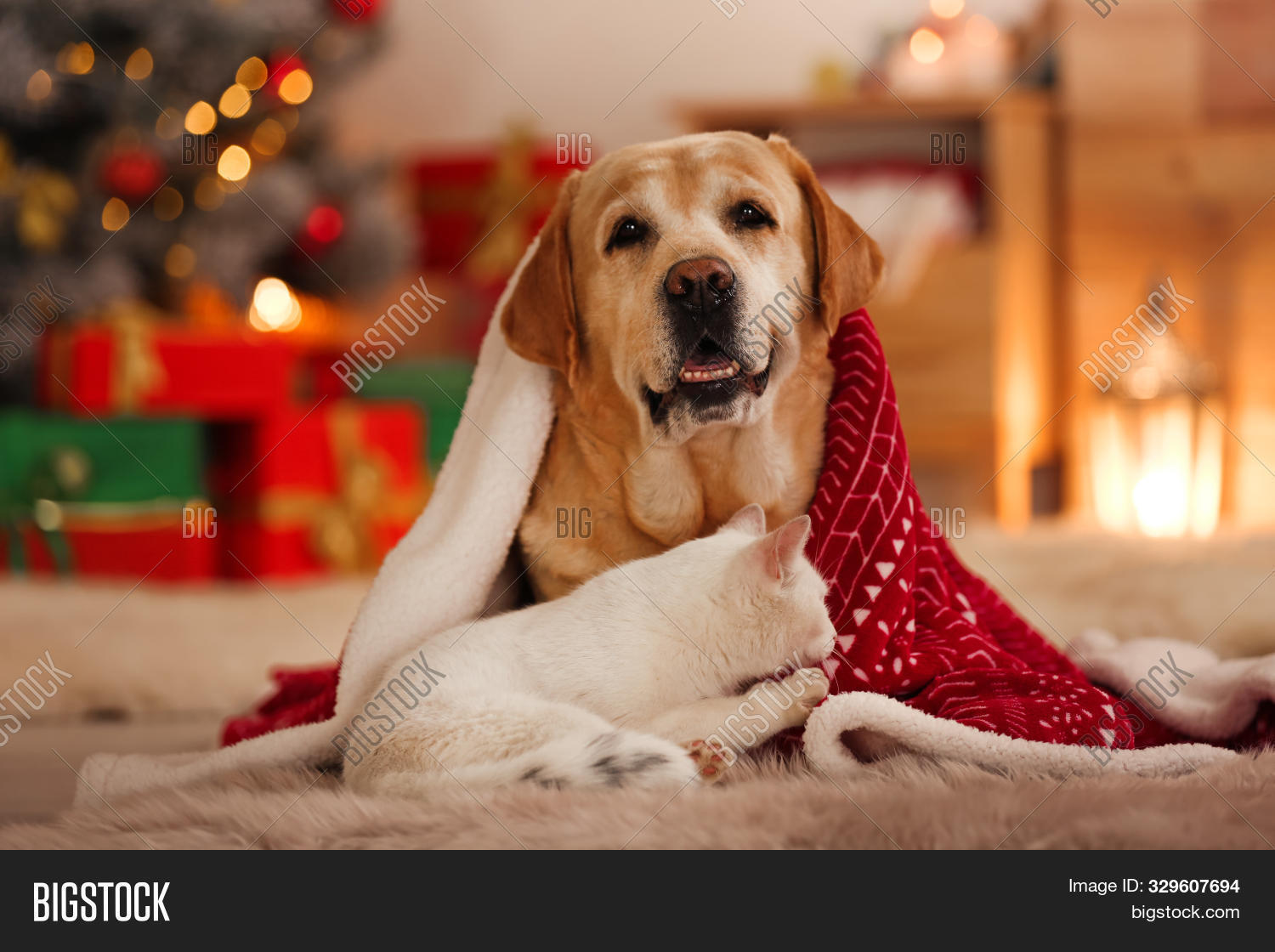 Adorable Dog Cat Image Photo Free Trial Bigstock