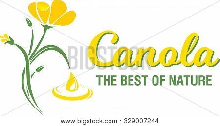 Rape Flowers, Canola Oil. Brassica Napus. Vetor Illustration.
