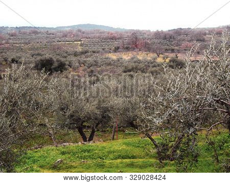 View Olive Groves Nearby Of Spanish Village