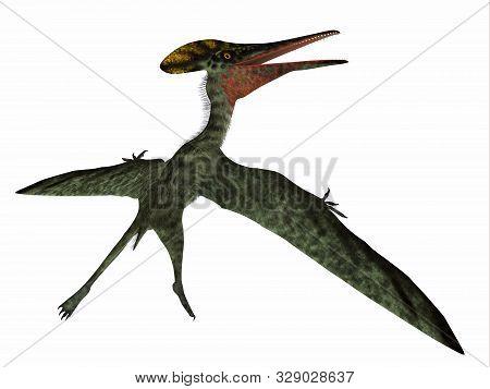Pterodactylus Pterosaur Tail 3d Illustration - Pterodactylus Was A Carnivorous Predatory Bird That L