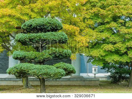Four Tiered Evergreen Tree.