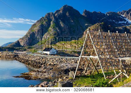 Henningsvaer village, Lofoten Islands, Norway, Traditional Drying cod, drying on wooden racks in Lofoten Islands