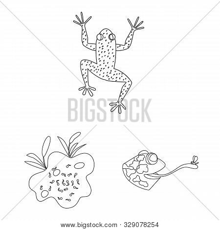 Isolated Object Of Amphibian And Animal Icon. Set Of Amphibian And Nature Stock Vector Illustration.