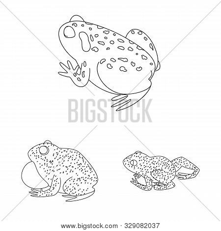 Isolated Object Of Amphibian And Animal Logo. Set Of Amphibian And Nature Stock Vector Illustration.