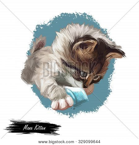 Manx kitten digital art illustration. Domestic animal, Manks cat watercolor portrait of playful kitten, Felis catus originated from Isle of Man. Face and body of mammal with paws and furry coat poster