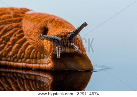 a nudibranch on white background
