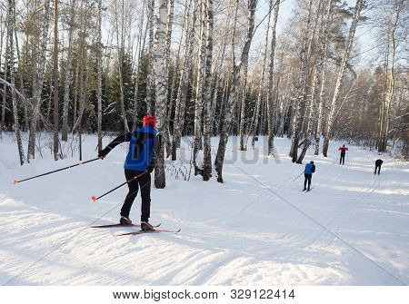 A Group Of Cross-country Skiers In A Sunny Winter In The Forest.