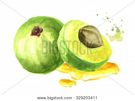 Amla  Berries With Essential Oil. Watercolor Hand Drawn Illustration, Isolated On White Background