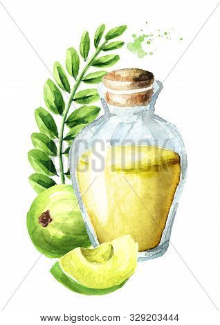 Amla Essential Oil Bottle With  Green Amla Berries. Watercolor Hand Drawn Illustration Isolated On W