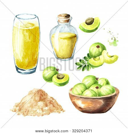 Amla Products.  Powder, Esential Oil, Juice And Green Ripe Fruits With Leaves Set, Watercolor Hand D