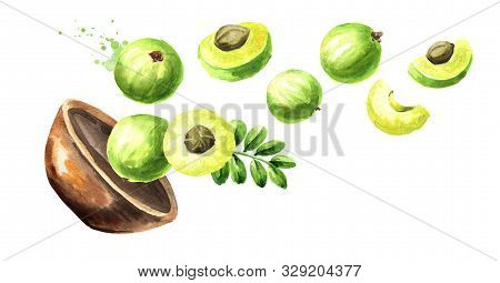 Bowl With Ripe Amla Berries. Watercolor Hand Drawn Horizontal  Illustration, Isolated On White Backg