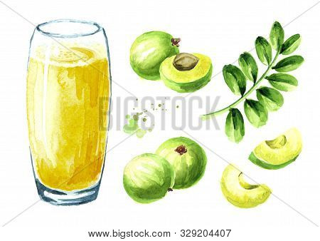 Gooseberry Or Amla Juice With Fresh Ripe Fruits Set. Watercolor Hand Drawn Illustration Isolated On
