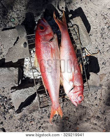 Grilling Fish, Red Snapper On Campfire In Caribe Beach.