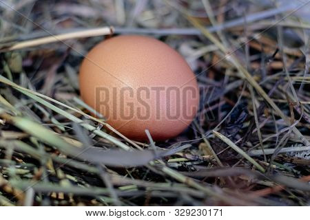 Chicken Egg In A Nest Of Hay Or Straw Close