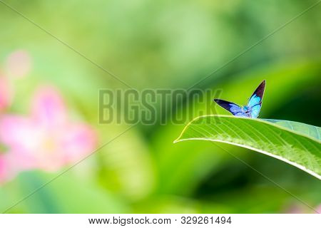 Beautiful Blue Butterfly Sitting On Leaf In Flower Garden.