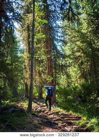 A Woman Hiking In The Summer With A Backpack In The Fresh Air On A Walk Along The Forest Path. Activ