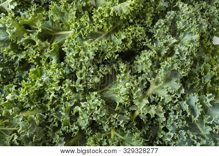 Top View. Kale Leaves. Background Of Kale Leaves. Fresh Kale Leaves Background. Texture Kale Close U