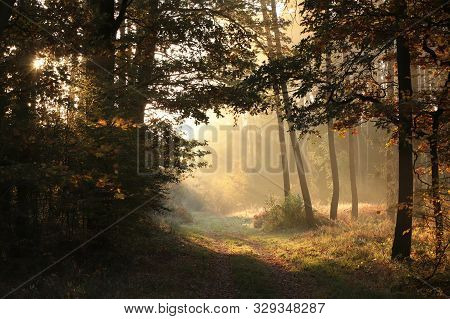 Autumn Forest path sunrise Nature landscape Forest road Nature background Trees Path in Nature. Nature background colors leaves foliage orange Nature background autumnal forest Travel Nature outdoors Road mist fog sun Nature Trees fall woods in sunshine.
