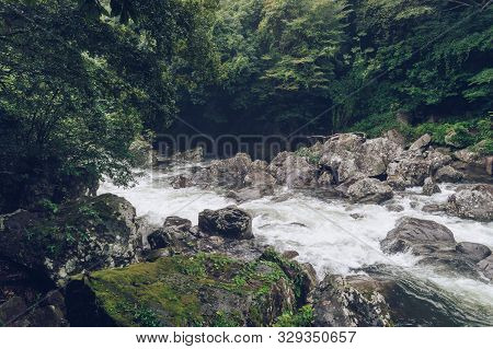 Beautiful Mountain River Torrent Inside Green Forest