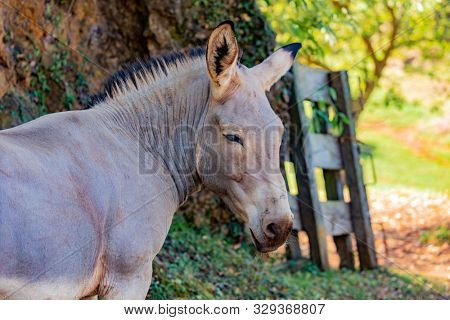 Somalian ass with grey hair in a natural background