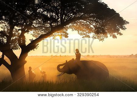 Men on elephant and women on the grass groun make merit to the monk in the morning with sunshine as a background poster