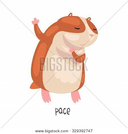 Pace English Language Preposition Of Place And Cute Hamster Character, Educational Visual Material F