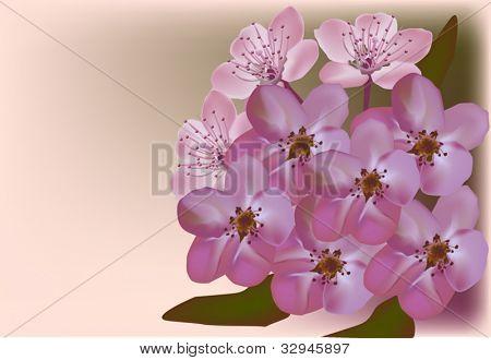 resimde açık renkli olarak Erik çiçekli