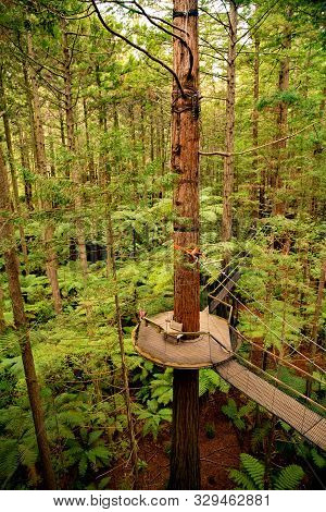 Suspended Wooden Platform Walkway High Up In Trees In The Redwood Whakarewarewa Forest In Rotorua