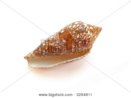 Small Sea Shell On White Background