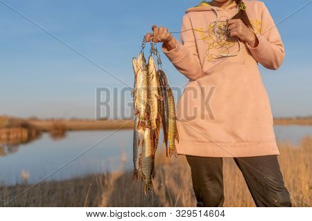 Yakut Girl Fisherman Hard Holds In The Hands Of Many Caught Fish Pike Hanging On Fish Stringer On Ba