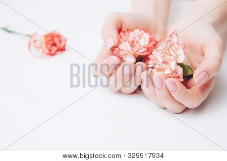Beautiful Female Hands Holding Carnations Against A White Background. Concept Ovarian Cancer, Infert