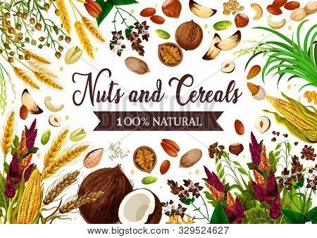 Nuts, Cereals And Grains, Healthy Organic Food. Vector Gmo Free Natural Superfood Wheat And Rye Or B