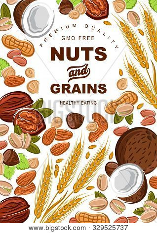 Cereal Grains And Nuts Organic Food Nutrition. Vector Healthy Wheat And Rye Or Buckwheat Grain, Coco