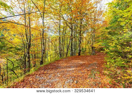 Walkway With Colorful Leaves In An Autumn Forest. Kvacianska Valley In Liptov Region Of Slovakia, Eu