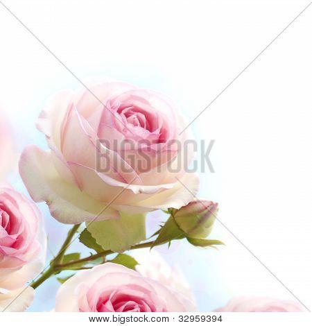 pink roses background floral border