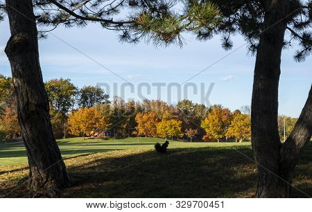 Silhouette Of A Black Squirrel In The Foreground And Beautiful Fall Colors And A Playground In The D
