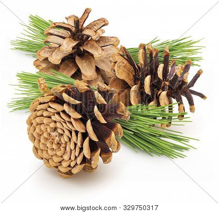 Group Dried Cones Pine Of Wild Pine. With Green Leaves Isolated On White Background. Isolated On Whi