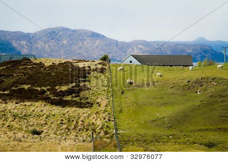 Mountain and sheep farm