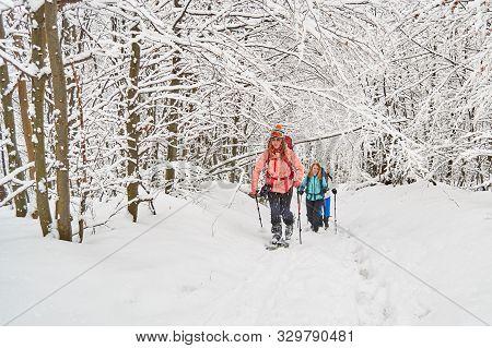 Three Women Ski Touring Under Snow Covered Trees In The Carpathian Mountains, Romania (baiului Mount