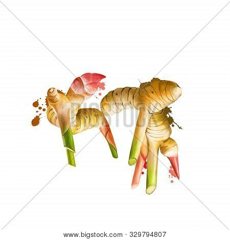 Galangal Root Isolated On White. Galangal Is A Rhizome Of Plants In The Ginger Family Zingiberaceae,