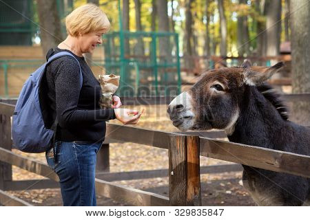 A Brown Donkey With A White Nose In The Aviary Is Waiting For A Treat. A Woman In A Black Pullover A